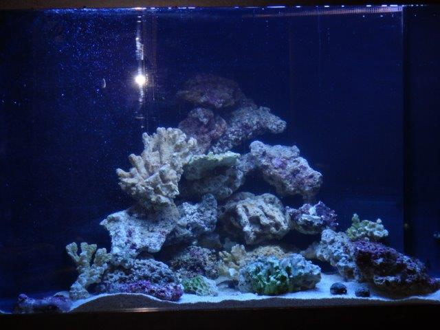 fishtank4.jpg