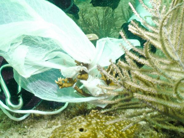 fl-reef-debris-20120817-001.jpg