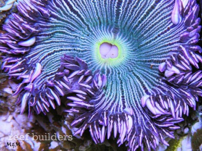 flower-anemone-2.jpg