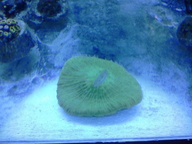 fungia small.jpg