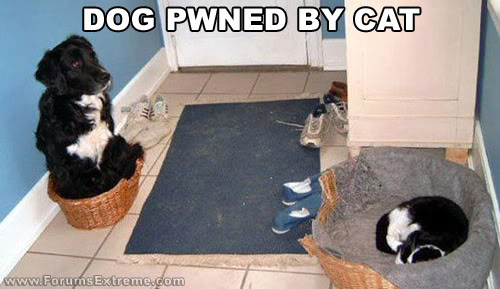 Funny_Pictures_General_Dog_Pwned.jpg