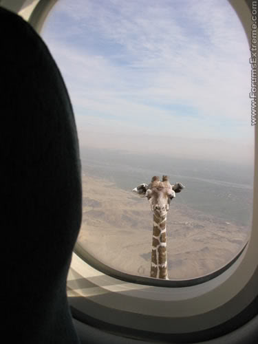 Funny_Pictures_General_Tall_Giraffe.jpg