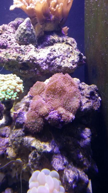 furry mushrooms R200.jpg