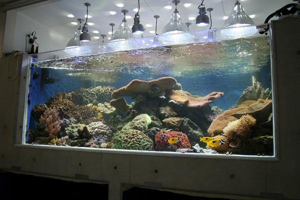 giant-reef-tank.jpg