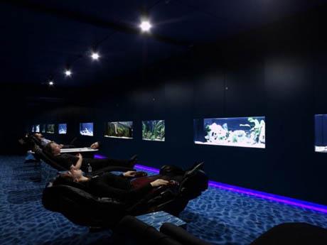 google-office-aquariums-2.jpg