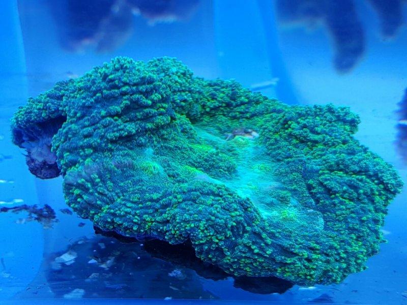 Green Brain.jpg