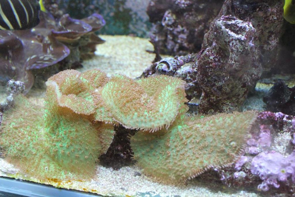 Hairy coral.jpg