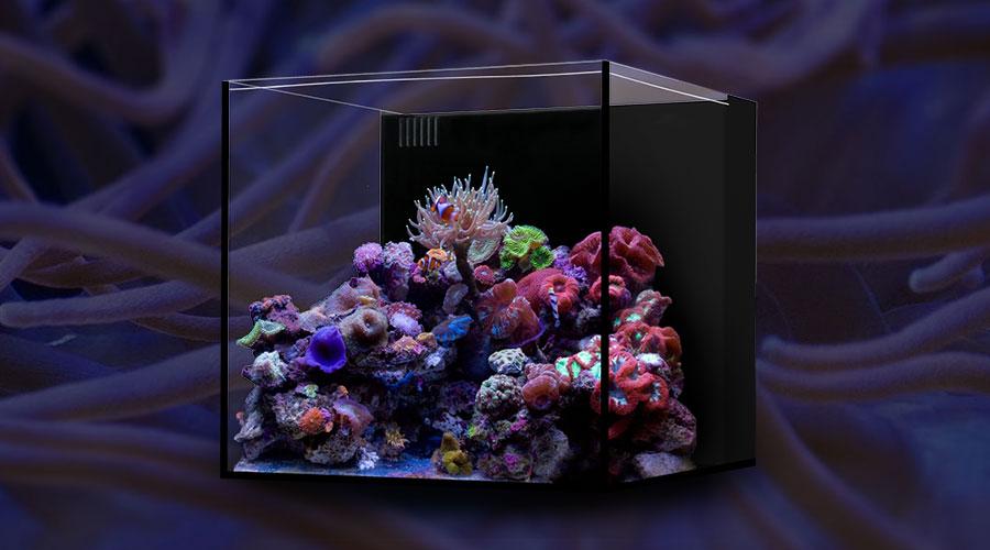 home-cube-1.jpg
