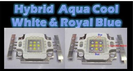 Hybrid Aqua Cool White & Royal Blue.JPG