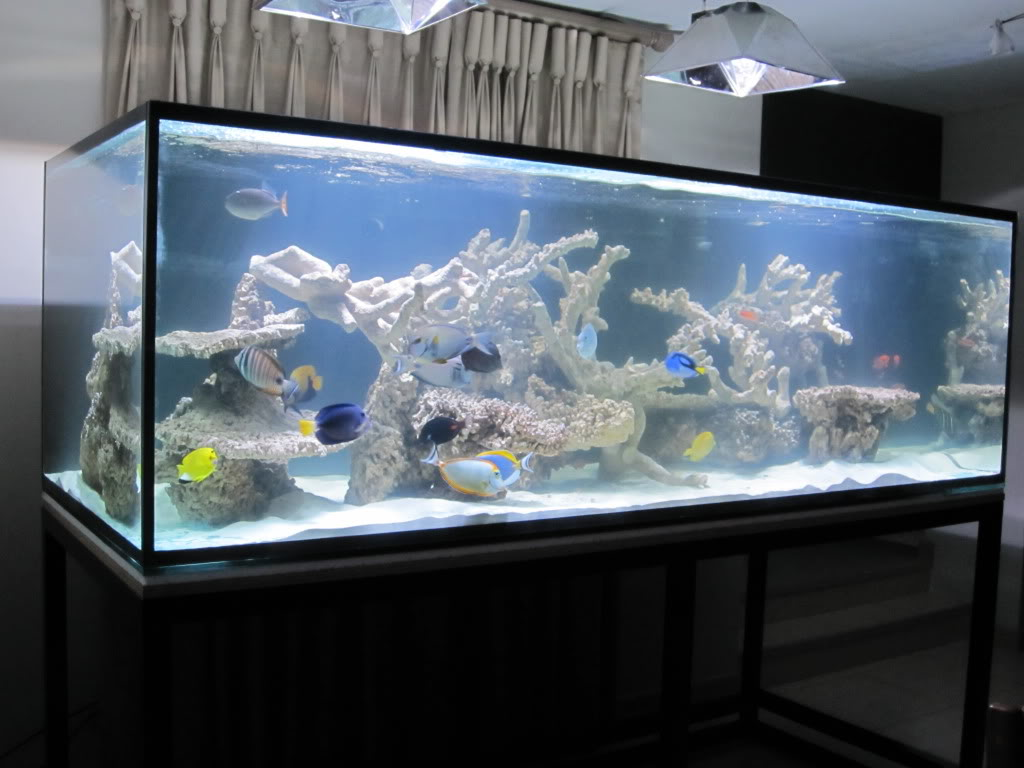 Tonga branch live rock marine aquariums south africa for Fish only saltwater tank