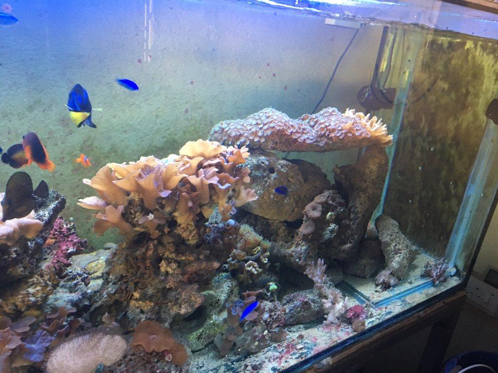 Freshwater aquarium fish cape town - Photos Of Actual Items For Sale