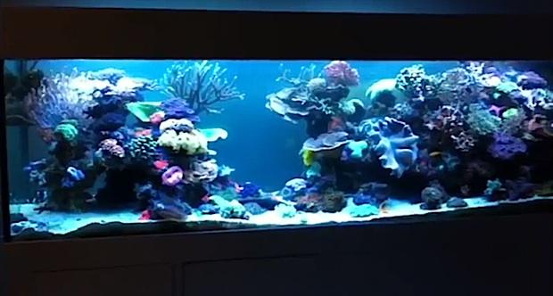 jaime-reef-tank.jpg