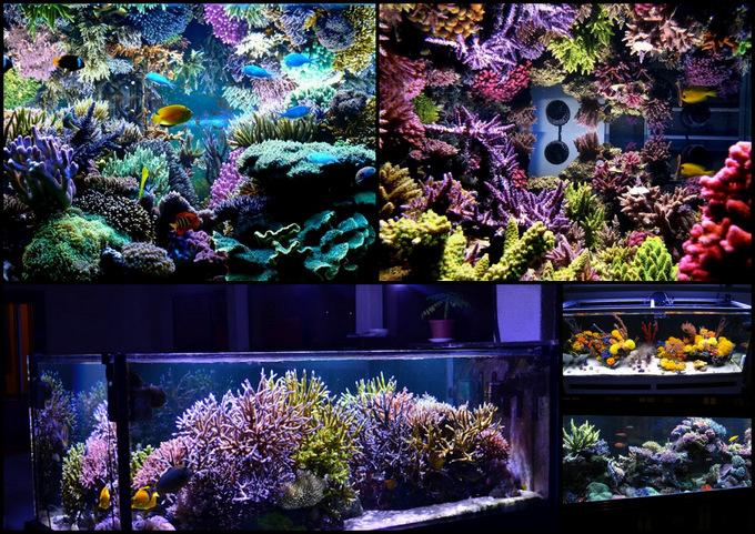Jan-willem-reef.jpg