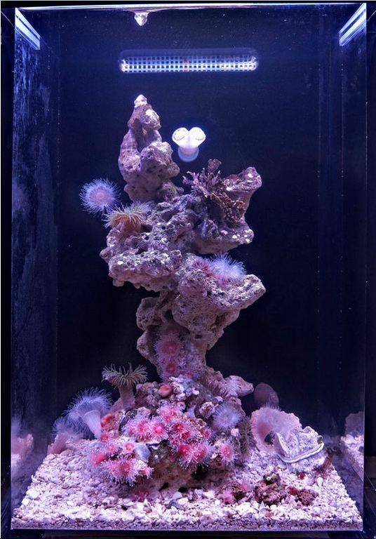 Jims-temperate-reef.jpg