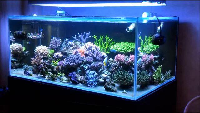 Jono-Chang-SPS-reef.jpg