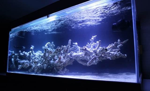 kang-reef-aquascape.jpg