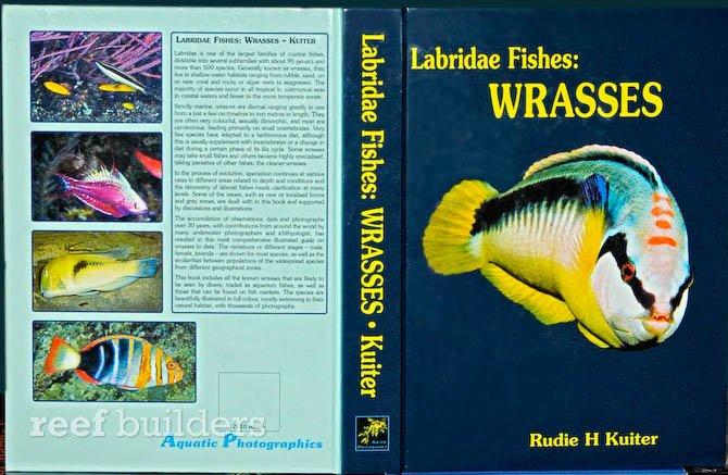 labridae-fishes-wrasses-book-rudie-kuiter1.jpg