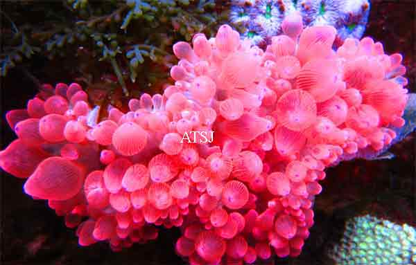 large-red-bubble-_zps566bc4f4.jpg