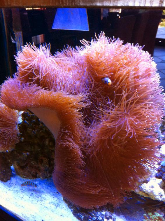 Leather Coral.jpg