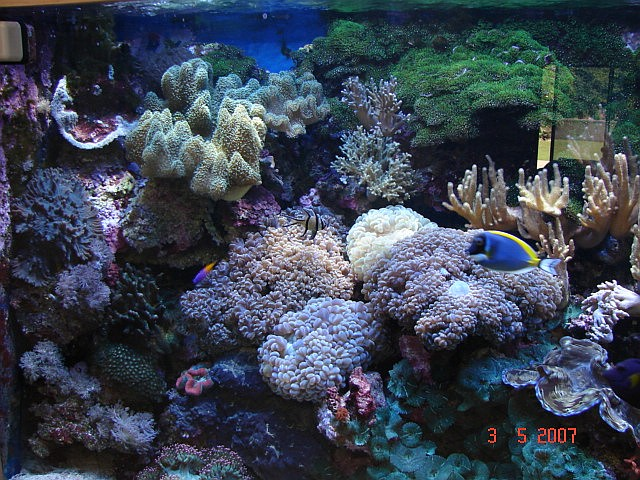 Left_Reef.jpg