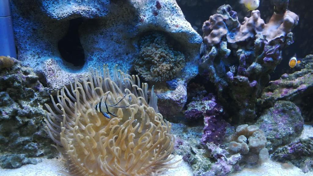LTA and Hammer Coral.jpg