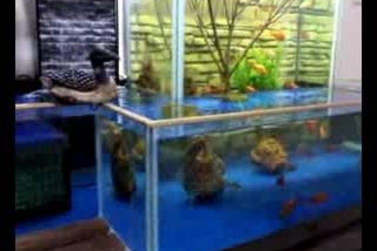make-open-bottom-fish-tank-800x800.jpg