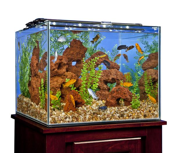 marineland-frameless-cube-aquarium-1.jpg
