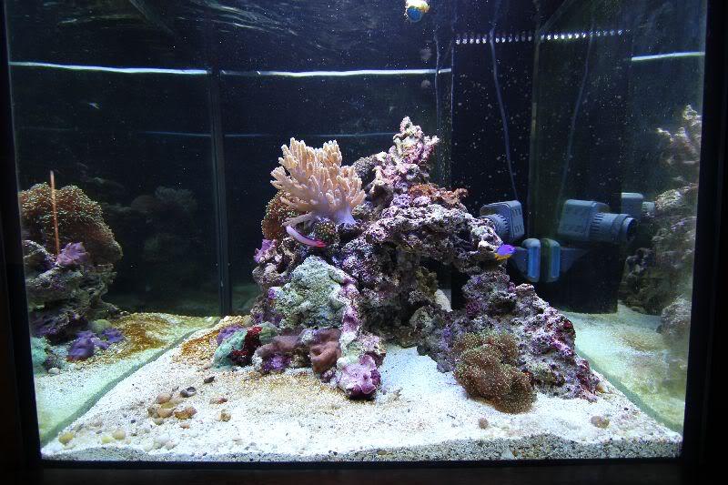 MarineTank179.jpg
