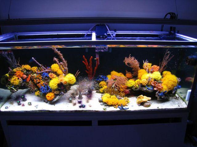 mariusz-sun-coral-reef-1.jpg