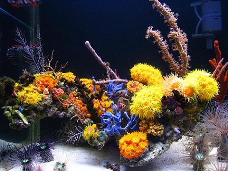 mariusz-sun-coral-reef-3.jpg