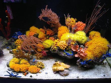 mariusz-sun-coral-reef-6.jpg
