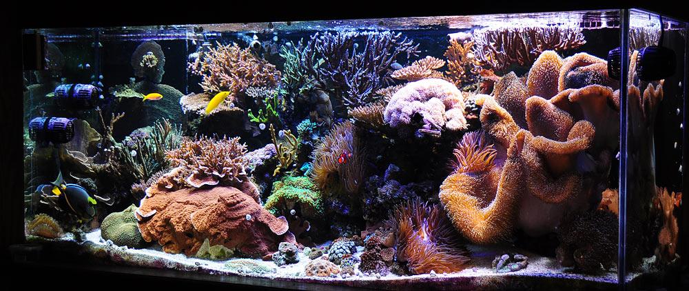Melevs-280-gallon-Reef-Tank.jpg