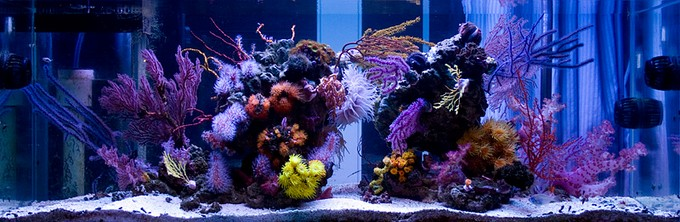MG_1080-Reef-Builders.jpg