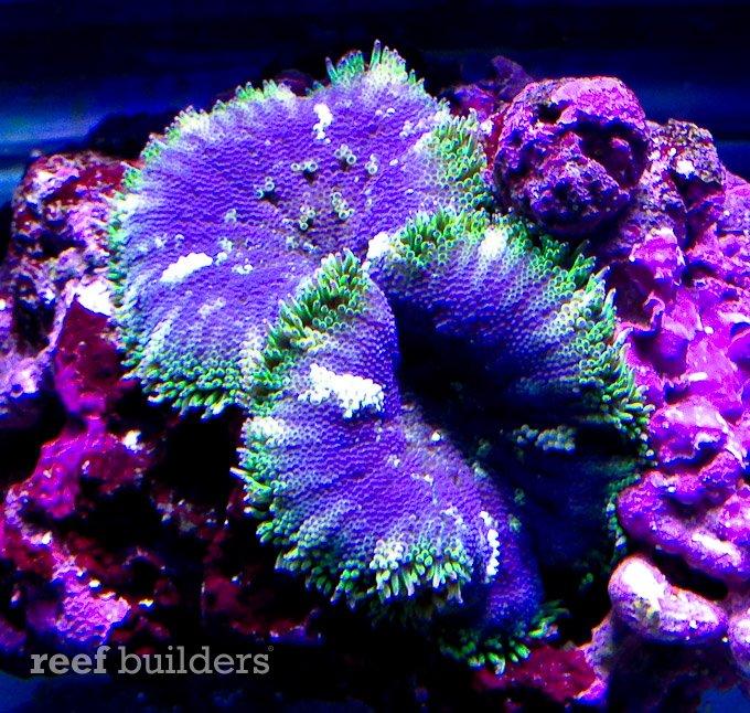 minimaxi-carpet-anemone-blue-1.jpg