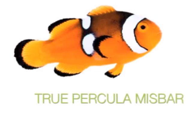 misbar-true-percula.png