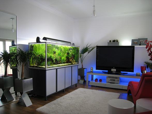 modern-freshwater.jpg