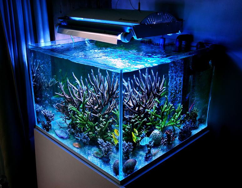 modern-reef-10.jpg