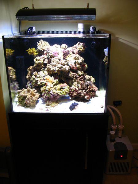 modern-reef-2.jpg