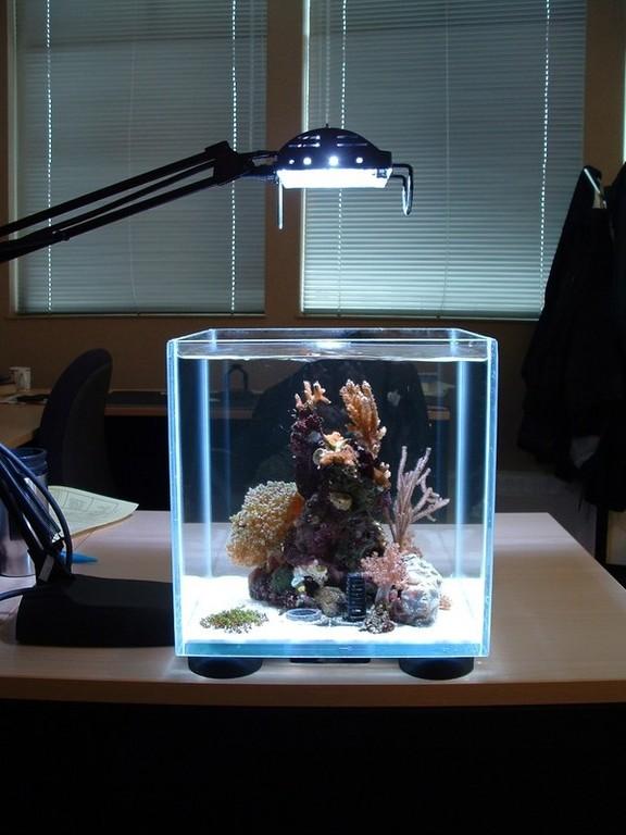modern-reef-4.jpg