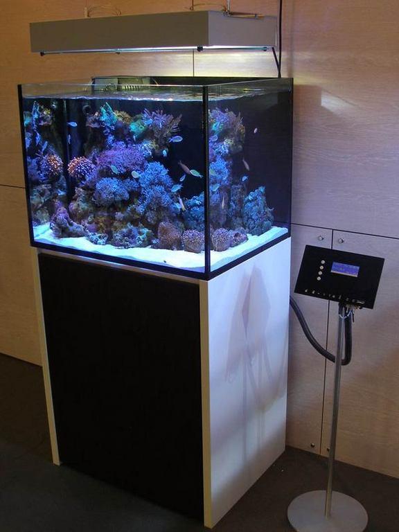 modern-reef-7.jpg