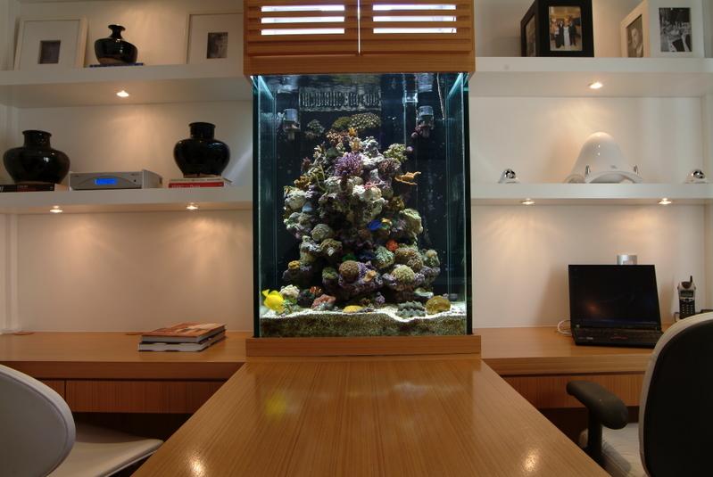 modern-reef-8.jpg