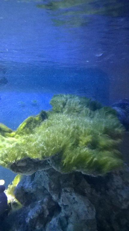 moss alge.jpg