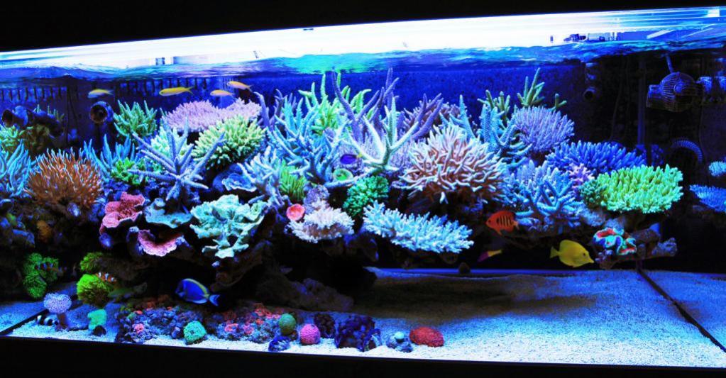 mr-kang-reef-aquarium.jpg