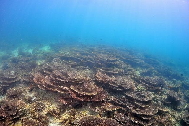 Musandam-Scuba-Diving-Coral.jpg