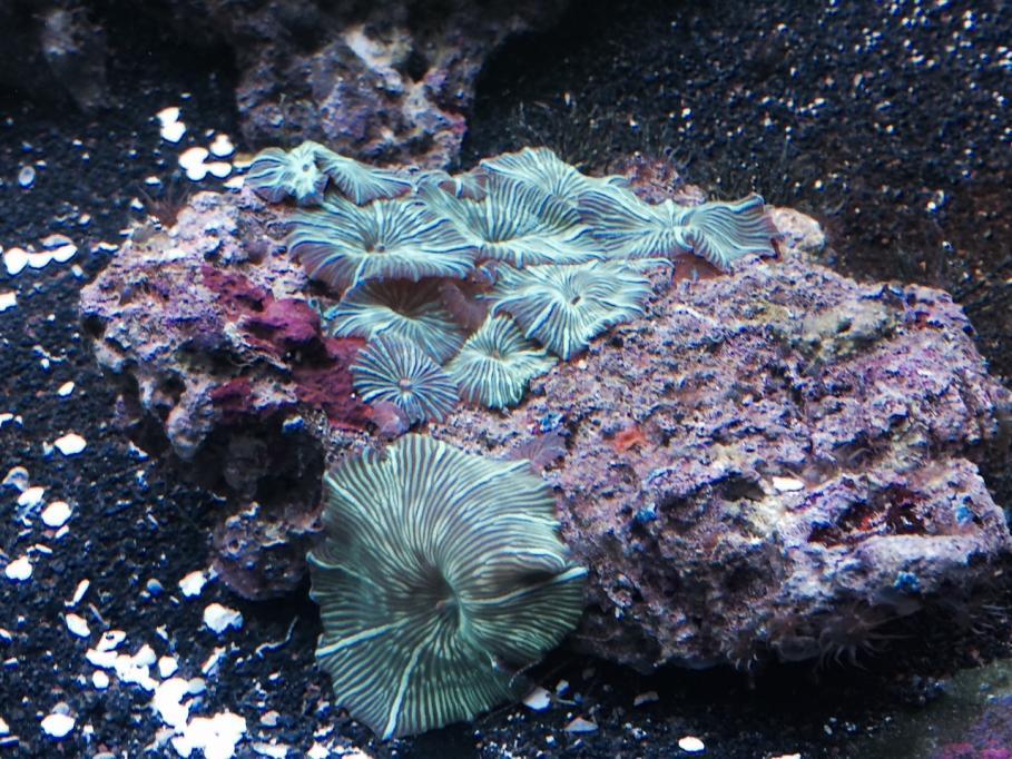 Mushroom 2.jpg