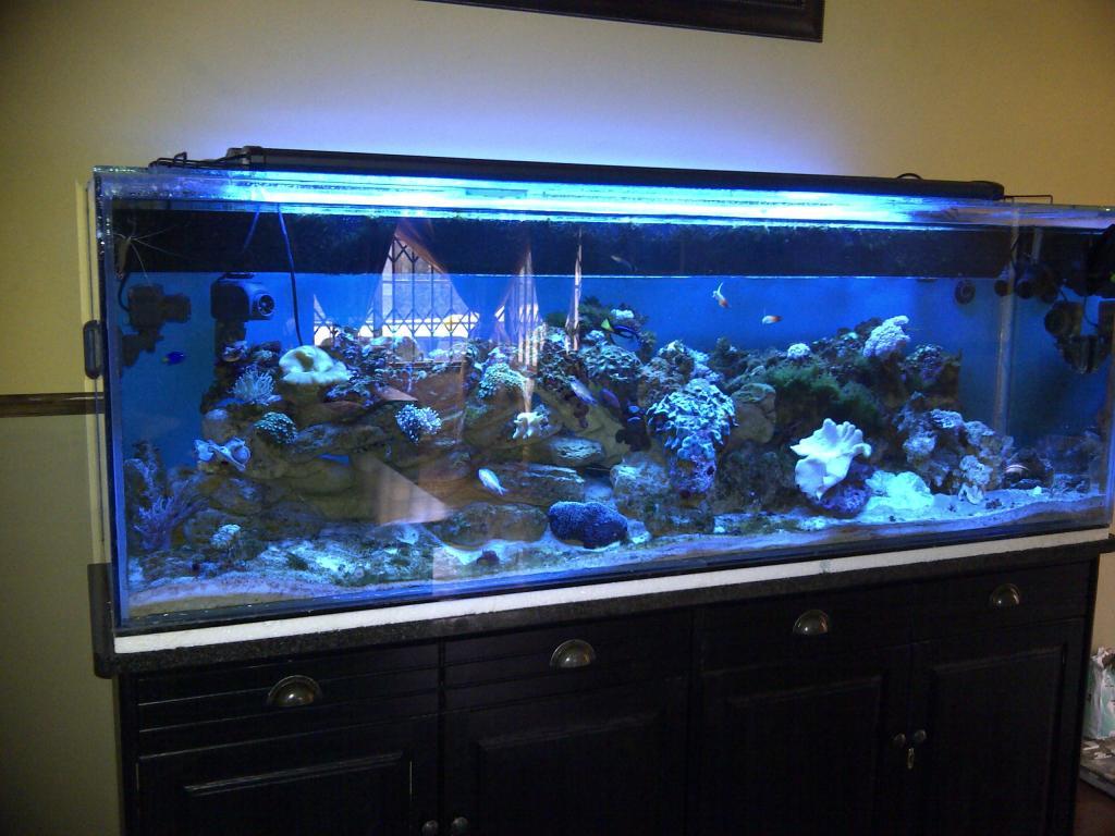 my tank.jpg