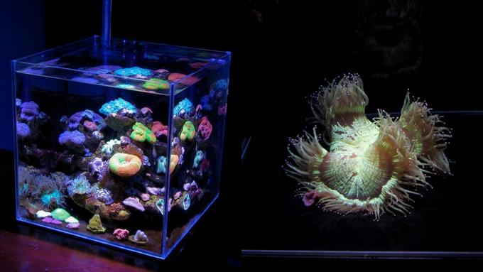 Nano-Reefs-Part-21.jpg
