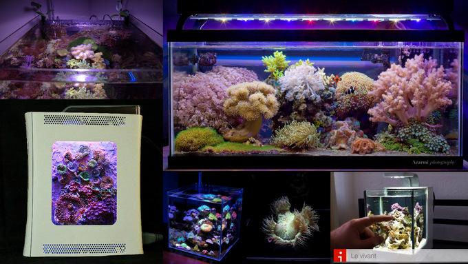 Nano-Reefs-Part-211.jpg