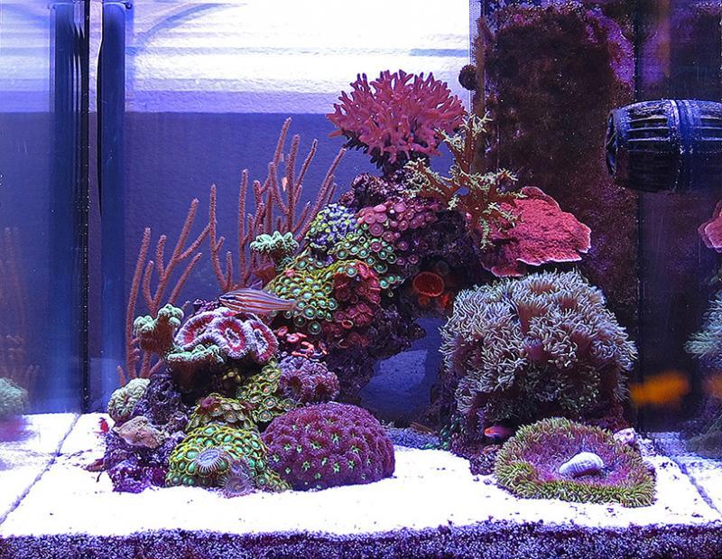 nano-tank-negative-aquascape.jpg