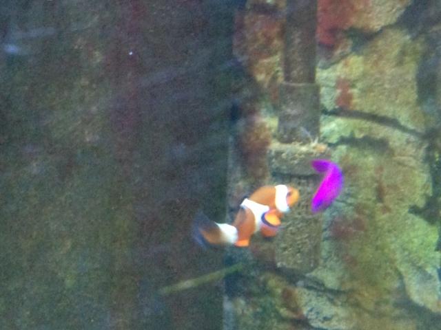 Nemo & Strawberry.JPG